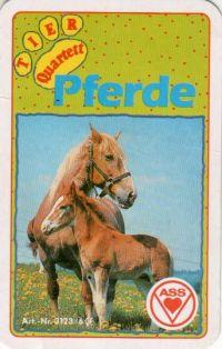 Pferde - Quartett
